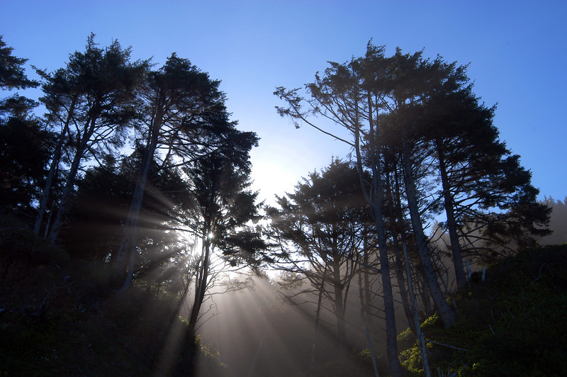 Morning sun shines through the trees on the Oregon Coast.