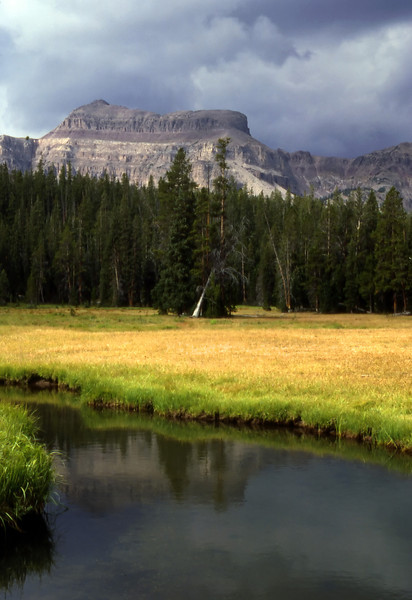 High mountain meadow in the High Uintas Wilderness in Utah.