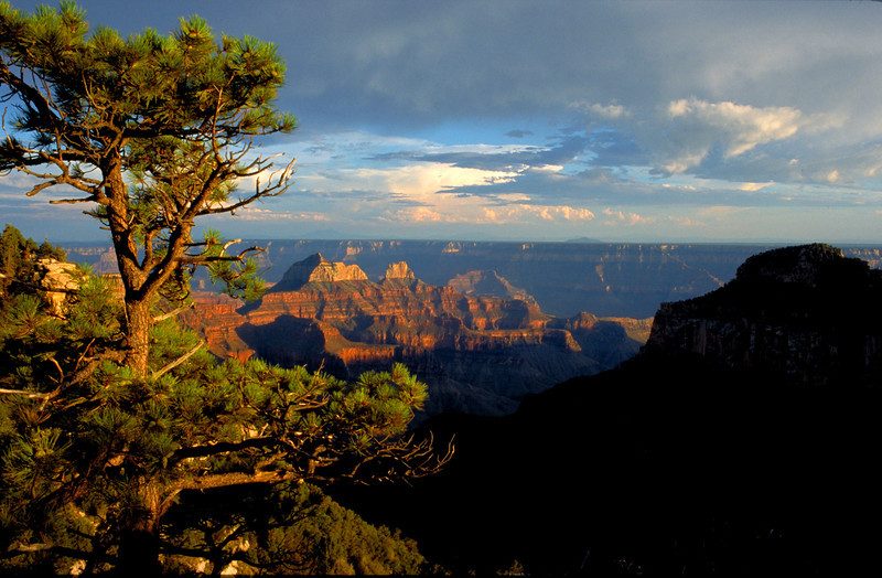 View of the Grand Canyon from the North rim in Arizona.