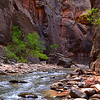 The Virgin River rushes through the Narrows in Zion National Park.