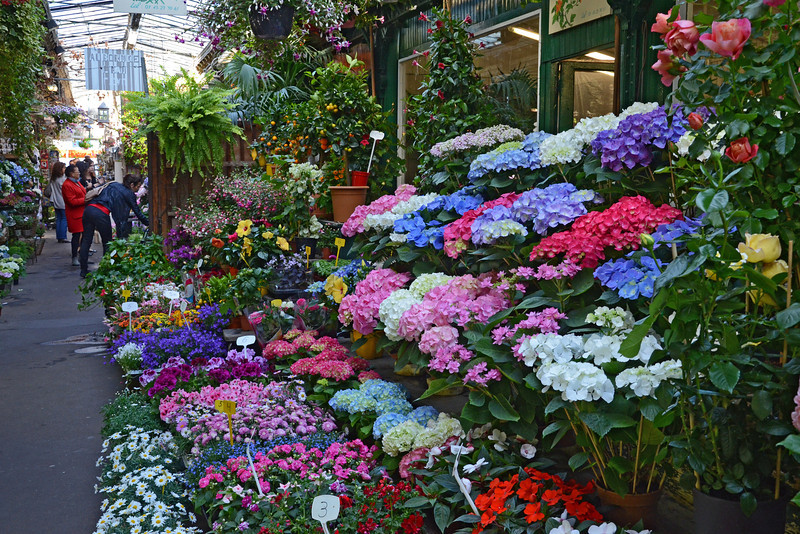 Flower market on Ile de la City in Paris