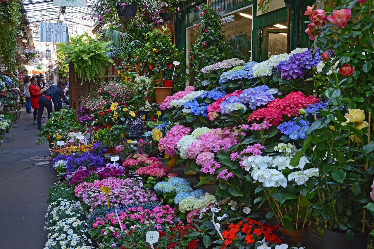 Flower market on Ile de la City in Paris