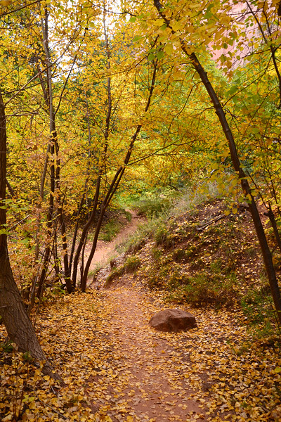 Wonderful section of the Taylor Creek trail in October.