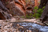 Virgin River in a beautiful spot in the Zion Narrows