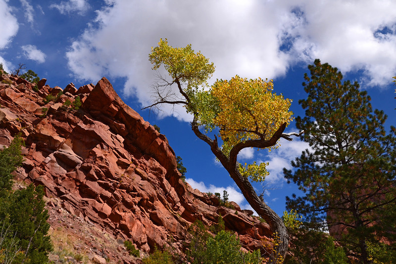 Bright colored rocks and sky on the Taylor Creek trail in Zion.