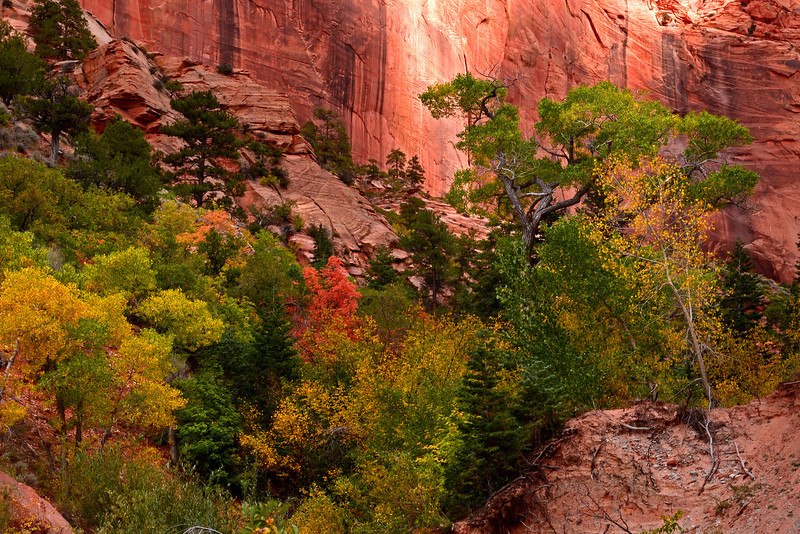 Colorful October trailside view from Taylor Creek.