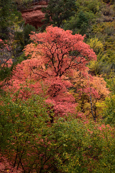 Fall Color in the Kolob Canyons