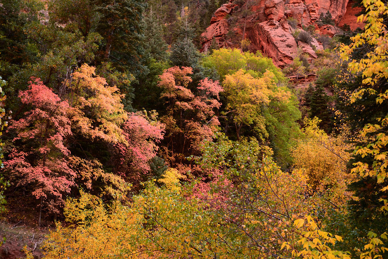 Colorful hillside October view from the Taylor Creek Trail in Zion.