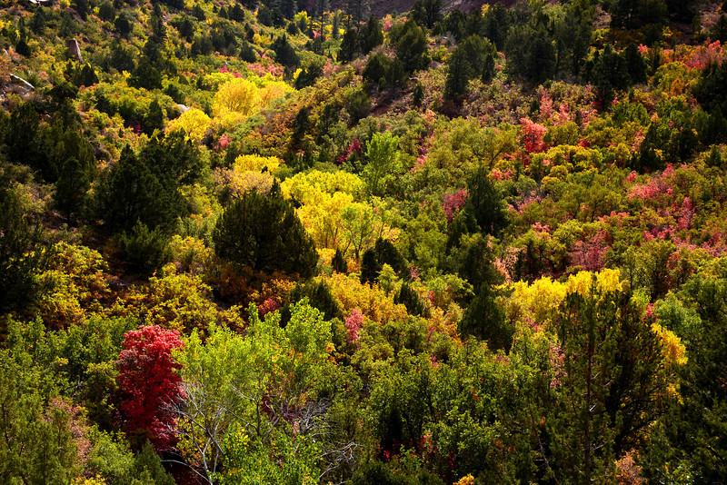 Colorful Autumn hillside view in the Kolob Canyon section of Zion National Park