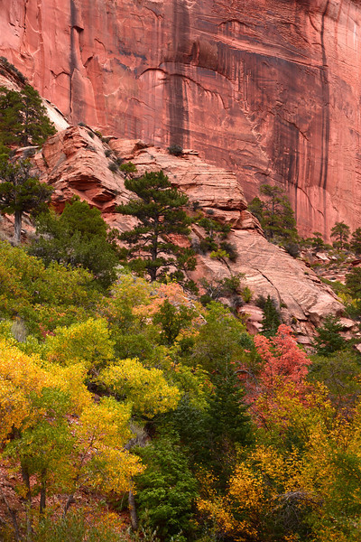 Taylor Creek hike in Zion National Park