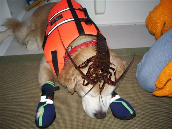 Sammy and the Lobster.  This could be a very bad thing to do on the Voo Doo scale since from about this moment thru the next 2 weeks we got pounded by wind and sea.  Be ye mindfull.