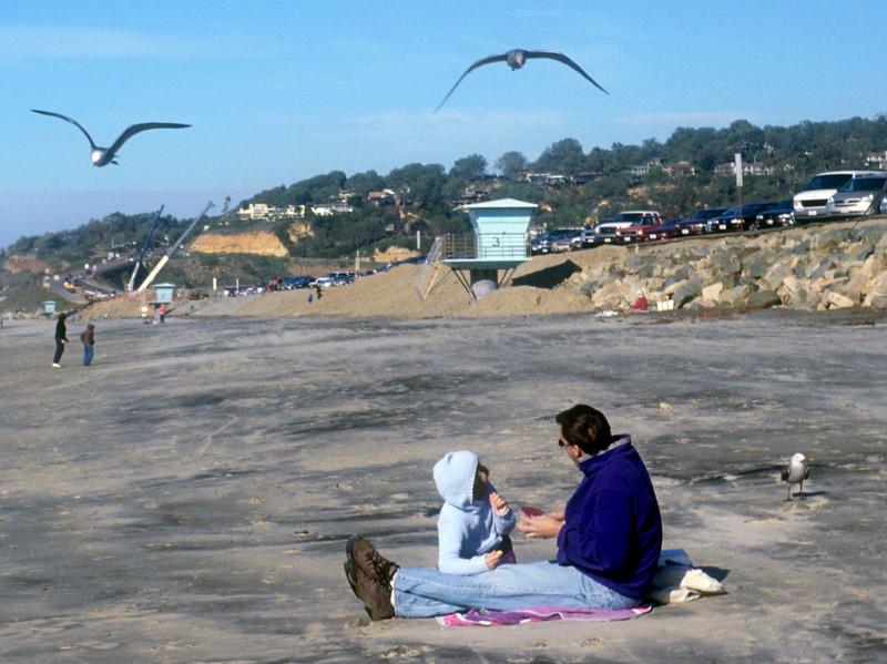 Daddy fighting hungry sea gulls!