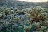 Spiky Landscape 2. Anza-Borrego Desert State Park