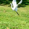 Bird photoshoot-46