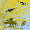 Bird photoshoot-43