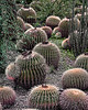 Cactus Trail