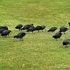 Birds feeding near the beach at Coronado.