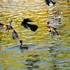 Bird photoshoot-36