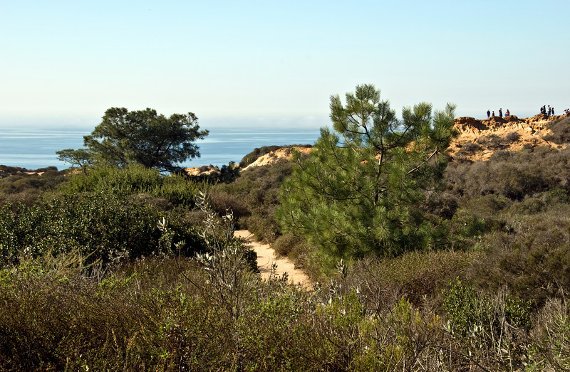 #127 Torrey Pines Path