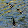 Bird photoshoot-40