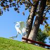 Bird photoshoot-50