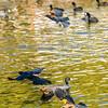 Bird photoshoot-37