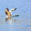 Bird photoshoot-4