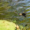 Bird photoshoot-25