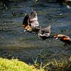 Bird photoshoot-27