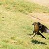 Bird photoshoot-20