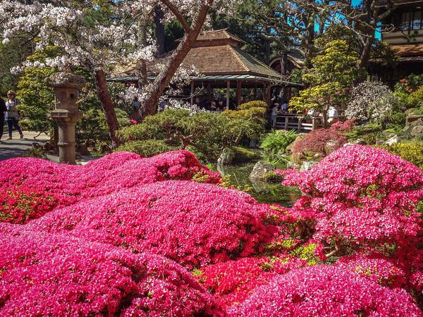 Japanese Garden in Golden Gate Park