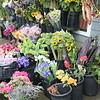 Flower Shop<br /> Sausalito, CA