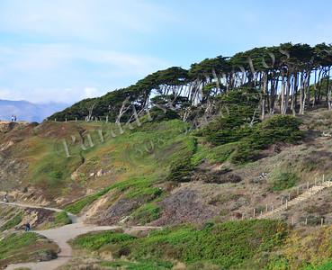trees hill near Cliff Hs SF 100311 489