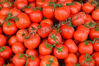 tomatoes Ft Mason 47