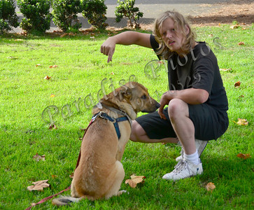 Lobo training dog SF 896