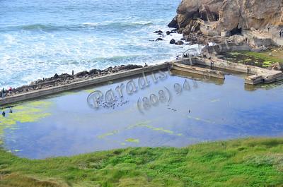San Fran near Cliff house 100211 493