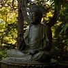 Tea Buddha
