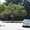 Palo Alto 02