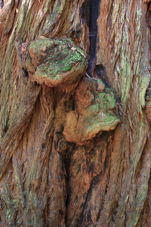 MuirWoods_CA_03 27 2010_037