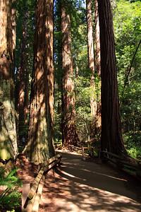 MuirWoods_CA_03 27 2010_010