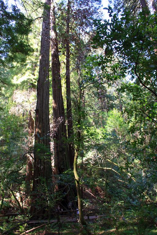 MuirWoods_CA_03 27 2010_029