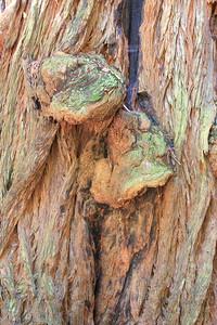 MuirWoods_CA_03 27 2010_039