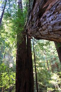 MuirWoods_CA_03 27 2010_056