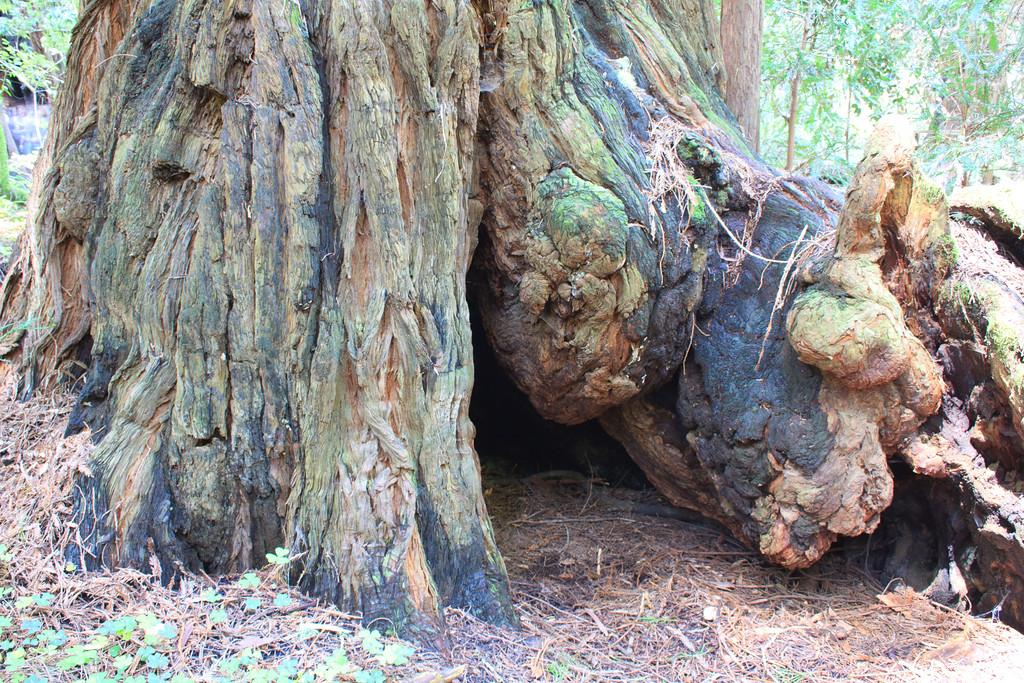 MuirWoods_CA_03 27 2010_027