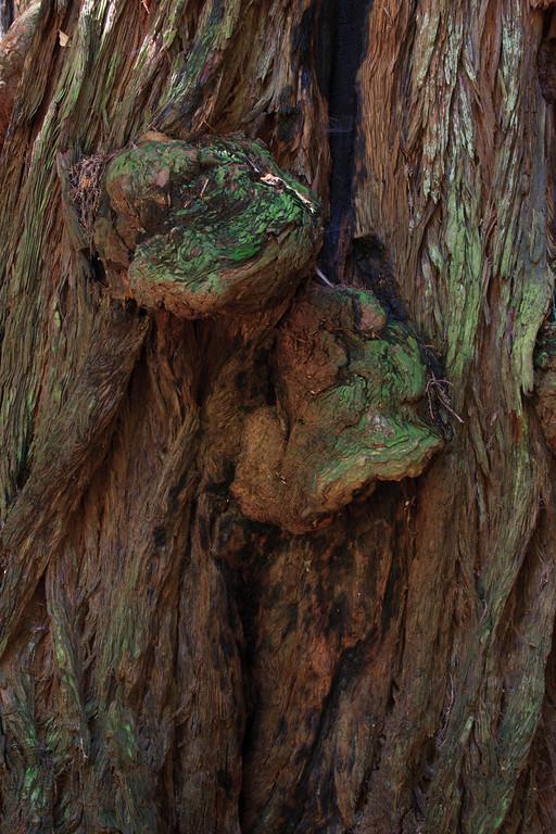 MuirWoods_CA_03 27 2010_038
