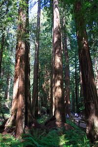 MuirWoods_CA_03 27 2010_015