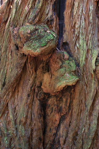 MuirWoods_CA_03 27 2010_036