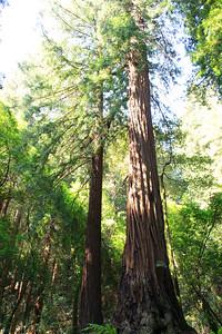 MuirWoods_CA_03 27 2010_004