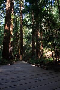 MuirWoods_CA_03 27 2010_047