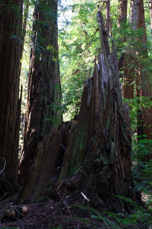 MuirWoods_CA_03 27 2010_053
